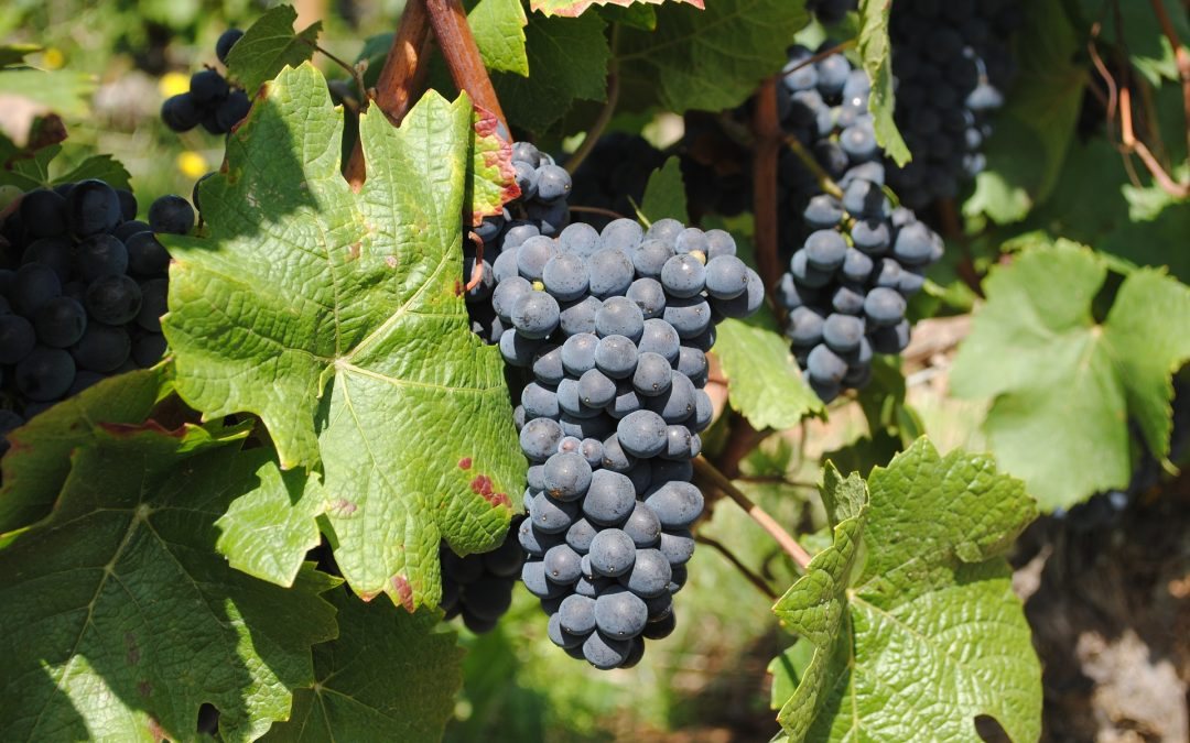 vin Chablis